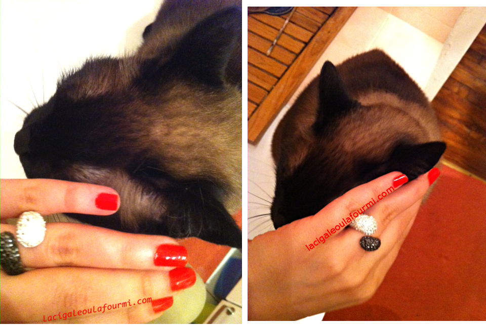 chat siamois, Clambake Essie