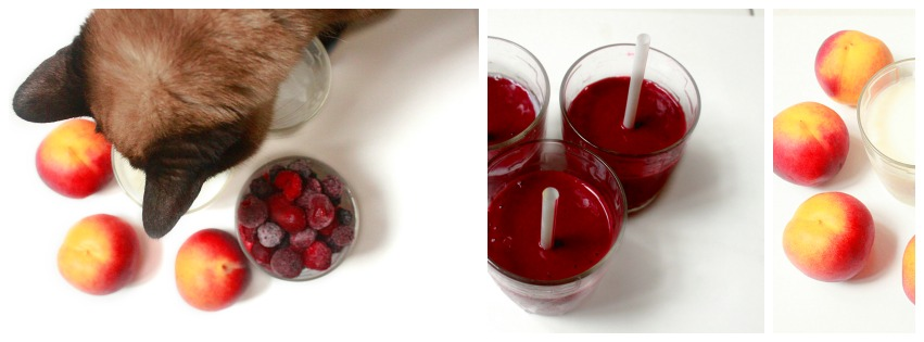 smoothie, chat, recette, fruits rouges